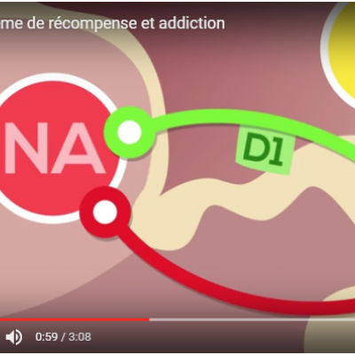 Video youtube système de récompense et addiction