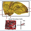 Spatial cell types in the hippocampal circuit